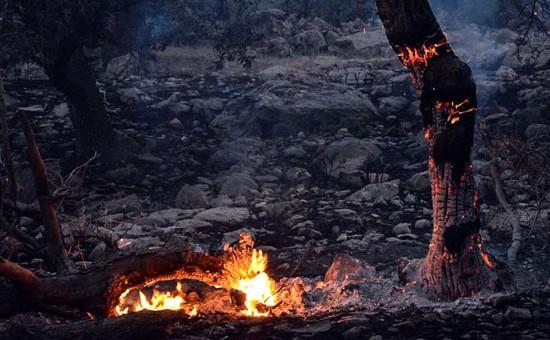 ۱۷۱ هزار هکتار از جنگل های ایلام در کانون بحران